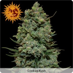 Cookie Kush Feminized - Barney's Farm