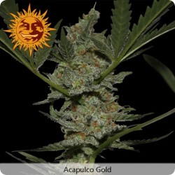 8 Ball Kush Feminized - Barney's Farm