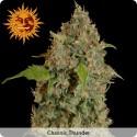 Chronic Thunder femminilizzata - Barney's Farm
