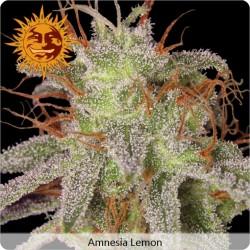 Amnesia Lemon Feminized - Barney's Farm