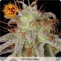Amnesia Lemon Feminisiert - Barney's Farm
