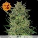 LSD Feminizadas - Barney's Farm