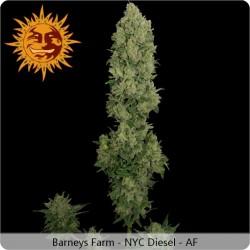 Graines autofloraison NYC Diesel de Barney's Farm