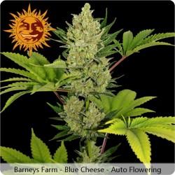 Blue Cheese Auto féminisées - Barney's Farm