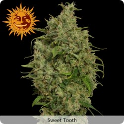 Sweet Tooth Feminized - Barney's Farm