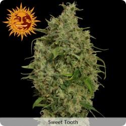 Sweet Tooth femminilizzata - Barney's Farm