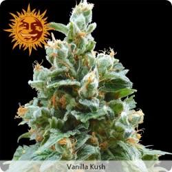 Vanilla Kush graines féminisées de chez Barney's Farm