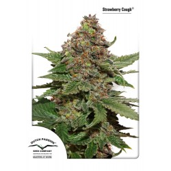 Strawberry Cough - Dutch Passion