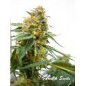 LA Bahia - Fanatik Seeds