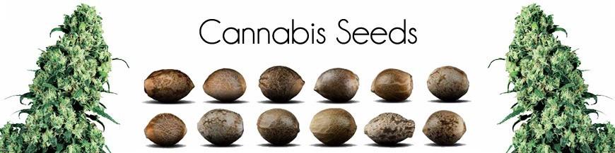 Semi di cannabis
