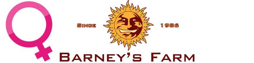 Barney's farm Feminized Seeds