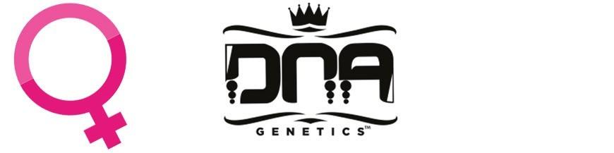 DNA Genetics Hanfsamen Feminisiert