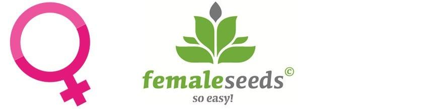 Female Seeds Hanfsamen Feminisiert