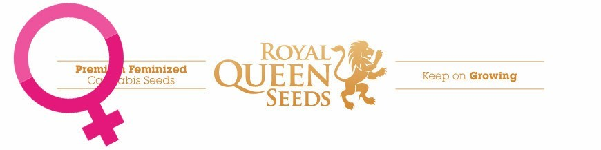 Royal Queen Seeds Feminized Seeds