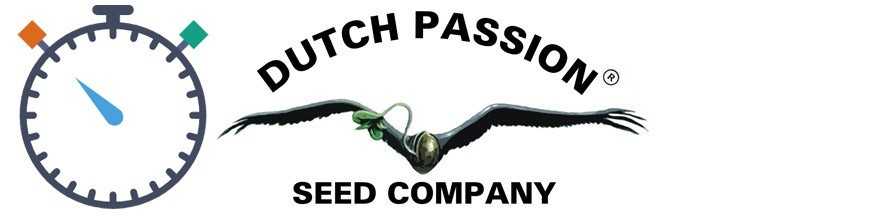 Dutch Passion Semillas Autoflorecientes