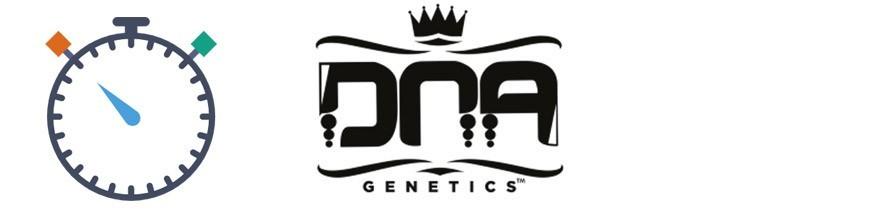 DNA Genetics Autoflorescents