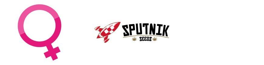 Sputnik Seeds Feminizadas