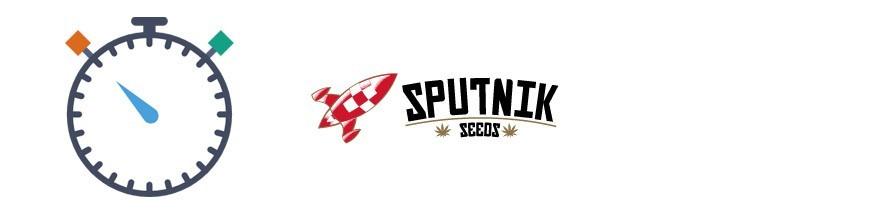Sputnik Seeds Autofloraison