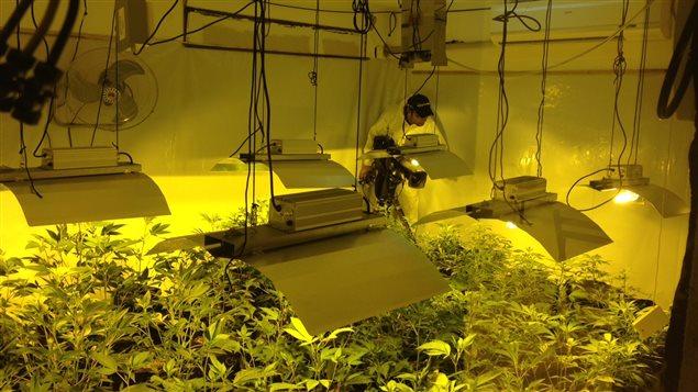 Légalisation du cannabis en Uruguay le point 2 ans après